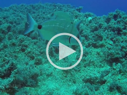 How Will Climate Change Impact Ocean Health?