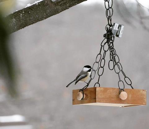 A chickadee at a bird feeder.  Photo Credit: Gillian Lay