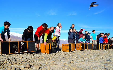 Juvenile kakī/black stilts being freed by Tekapo and Arawhenua school students.