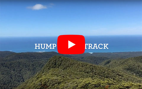 Hump Ridge track video.