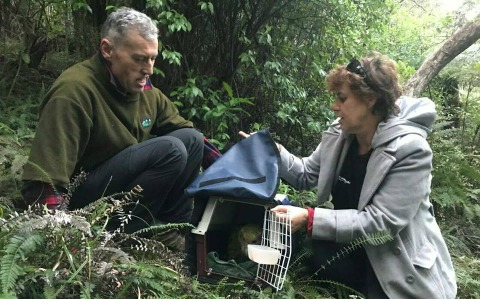 Tane Davis and Fiona McKenzie releasing kākāpō on Hauturu