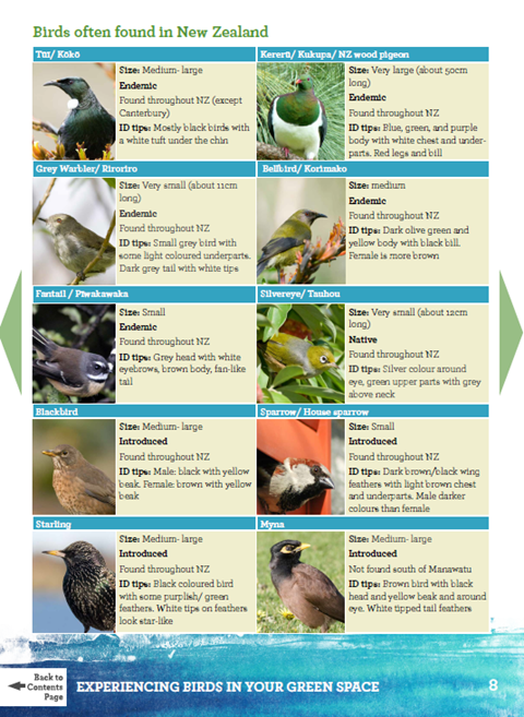 Experiencing Birds in your green space