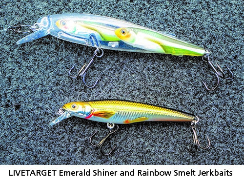 LIVETARET Emerald Shiner and Rainbow Smelt Jerkbaits