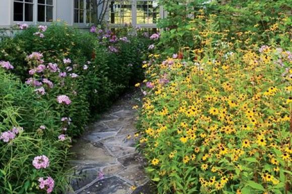 Wildflower-lined walkway