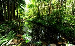 Rainforest garden with pond