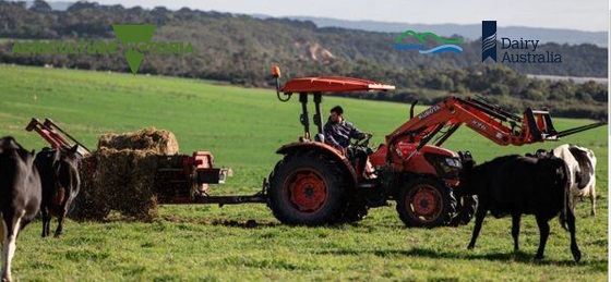 tractor and cows in a green paddock