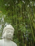 Buddhism.145608