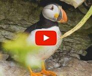 Vidéo ornithologie