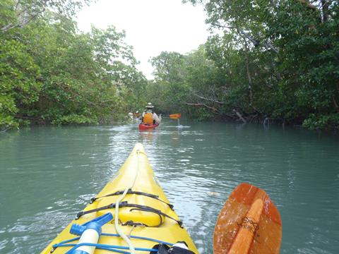 Sea kayaking in the beautiful waters of the Ten Thousand Islands