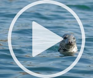 Vidéo faune