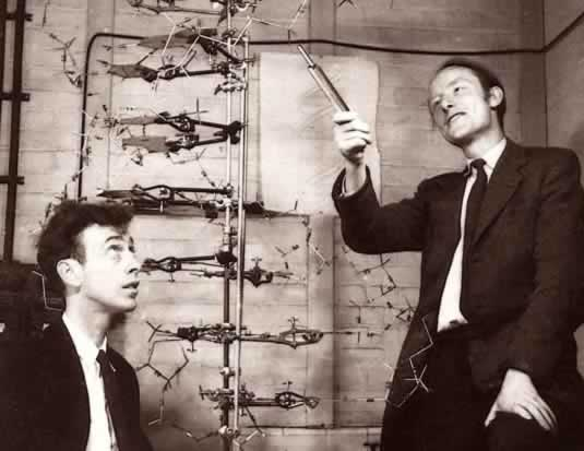James Watson & Francis Crick discovered