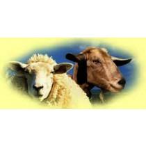 Goat-Mutton challenge
