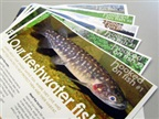 Additional Fish Fact Sheets Now Available