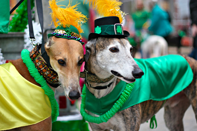 St. Patrick's Day Dog Parade