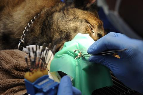 Veterinary Nursing Journal 32