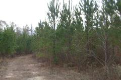 Englishville Road Tract, Macon Co. GA
