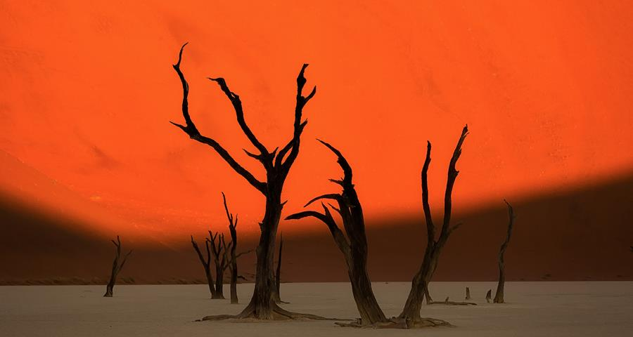 Namibia sand dunes and trees