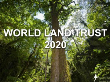 Forest tree image with the words World Land Trust 2020 overlaid. Image © Roberto Pedraza.
