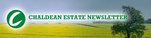 chaldean newsletter