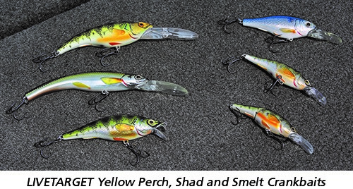 LIVETARGET Yellow Perch, Shad and Smelt Crankbaits