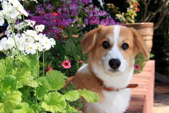 Cut doggie in garden