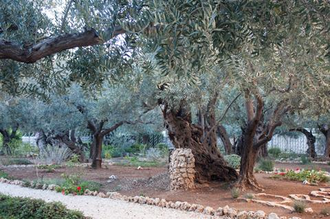 The Holy Land Tour Return To Travel Special 2022 Maranatha Tours