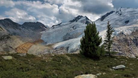 whitebark pine, sorcerer lodge