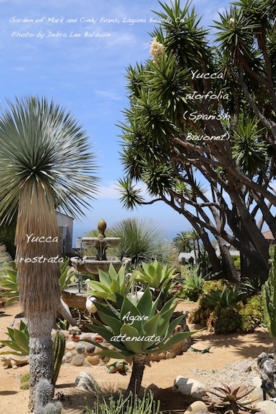 No-Water Succulents for Southern California Gardens