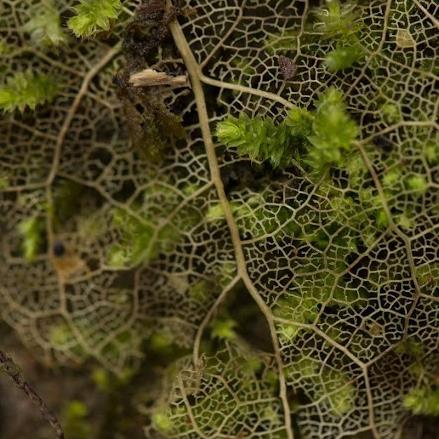 Image of leaf skeleton