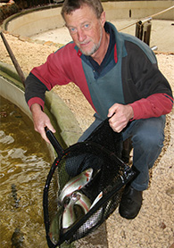 Tony Church with trout he has bred